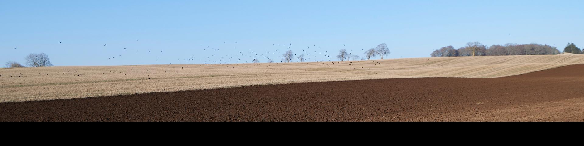 Farm - plowed field