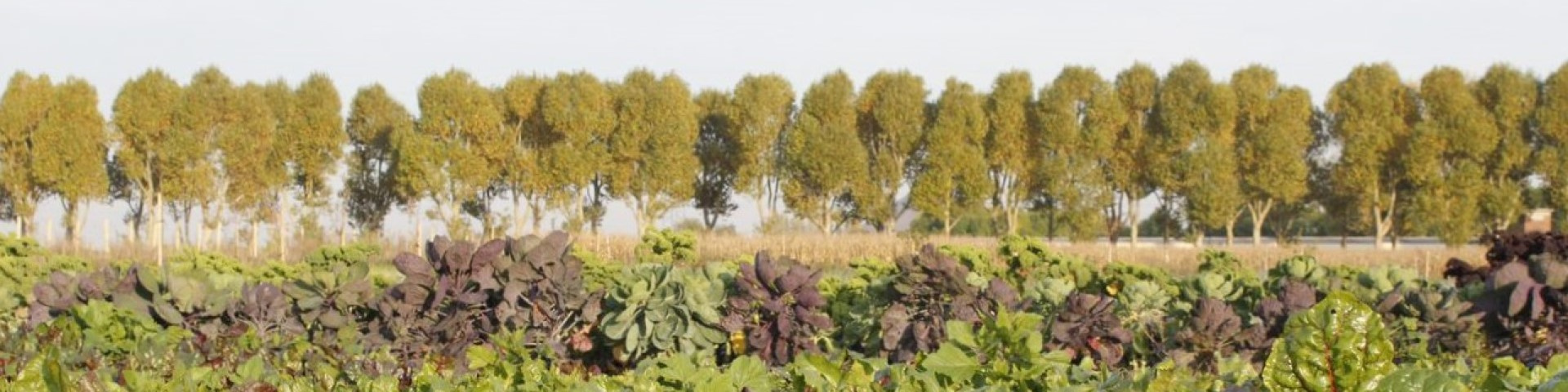 Trees and produce growing on a French 'farm incubator' farm