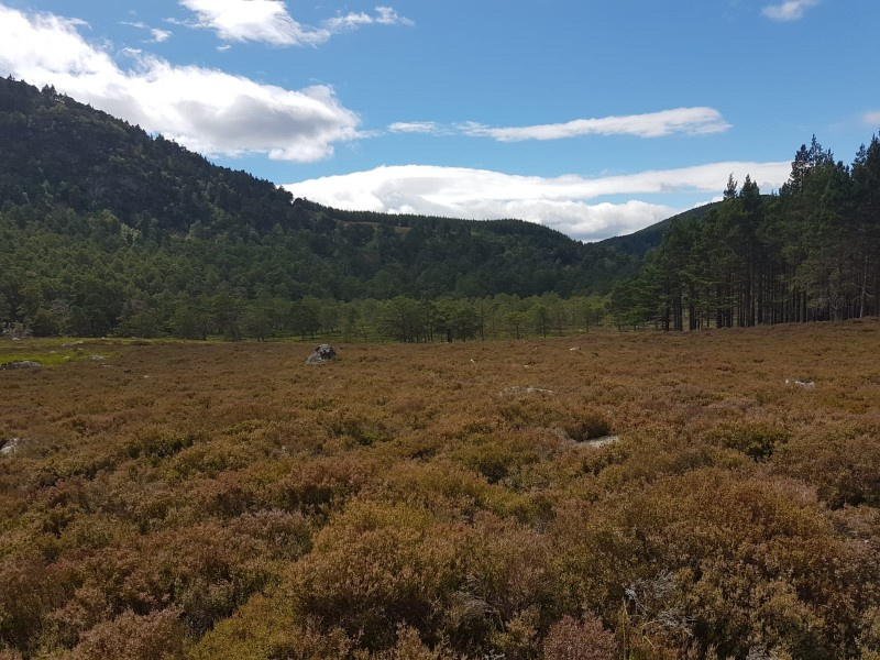 Landscape showing a mix of heather moorland and forested hillside