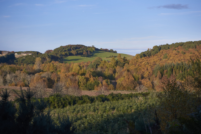 Autumn colours over land in the Black Isle