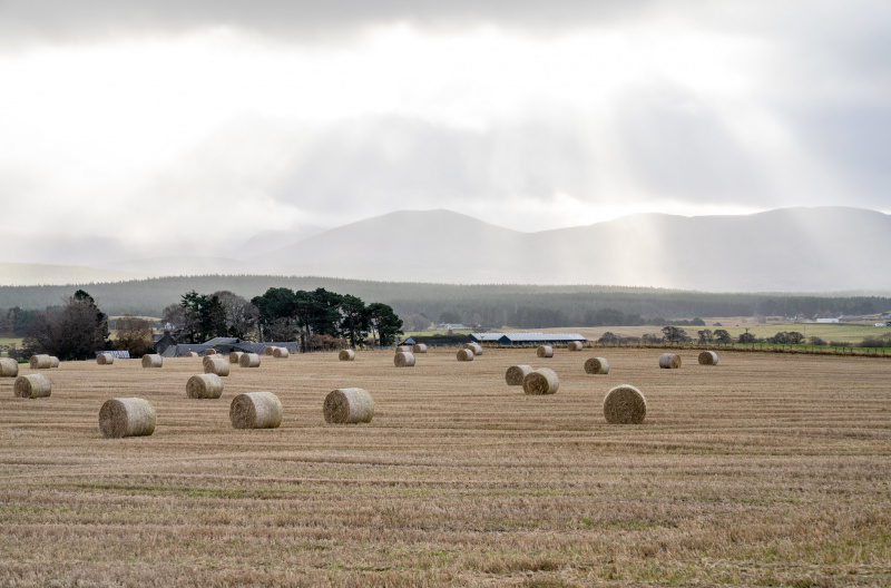 Hay bales in a field (Courtesy of Rural Matters)