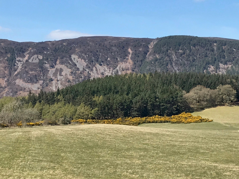 Field and forested hillside near Dores, Highlands