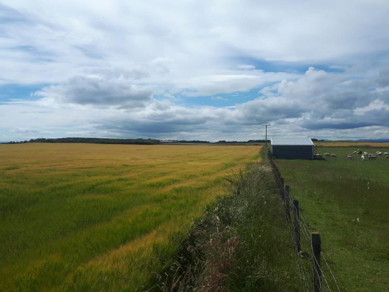 Farmland near Portmahomack