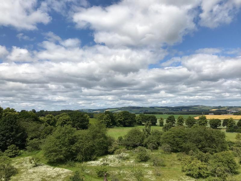 Open fields on a summer's day