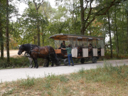 Carriage pulled by Percheron horses for a tour around the forest